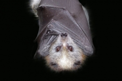 Bat Spirit Animal