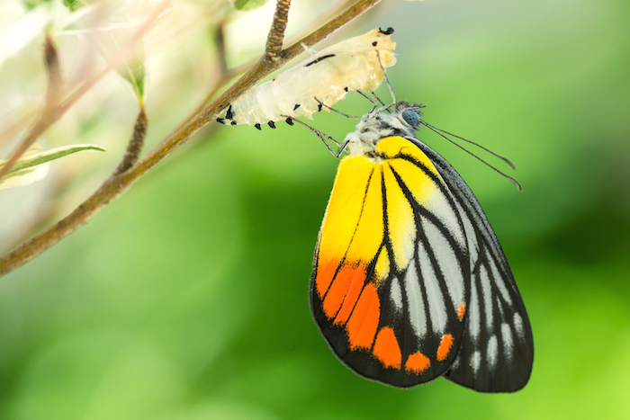 Butterfly Spirit Animal Totem