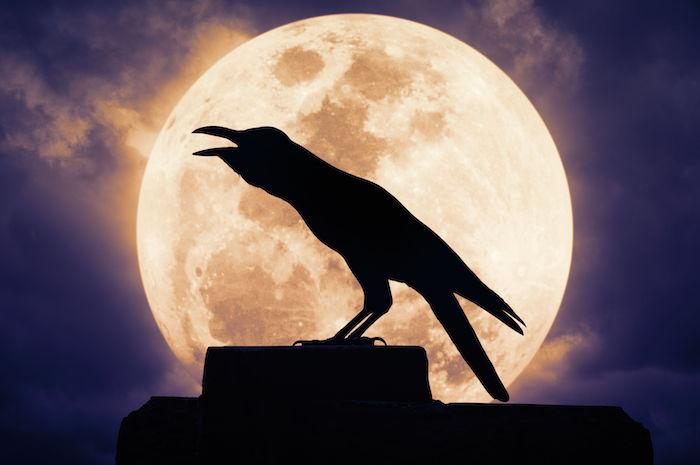 Crow Spirit Animal Meaning Symbolism