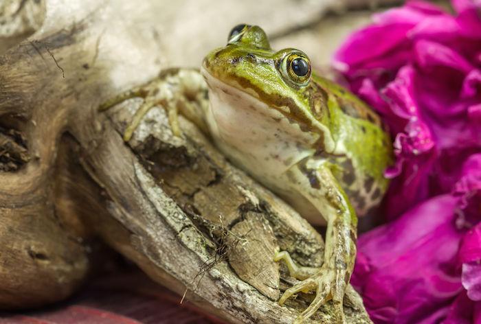 Frog Spirit Animal | Totem Meaning