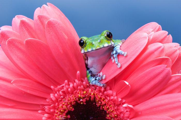 Frog Spirit Animal Totem Meaning
