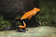 Frog Spirit Animal