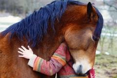 Horse Spirit Animal