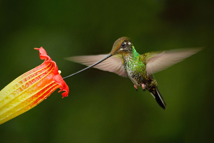 Hummingbird Spirit Animal Meaning Symbolism