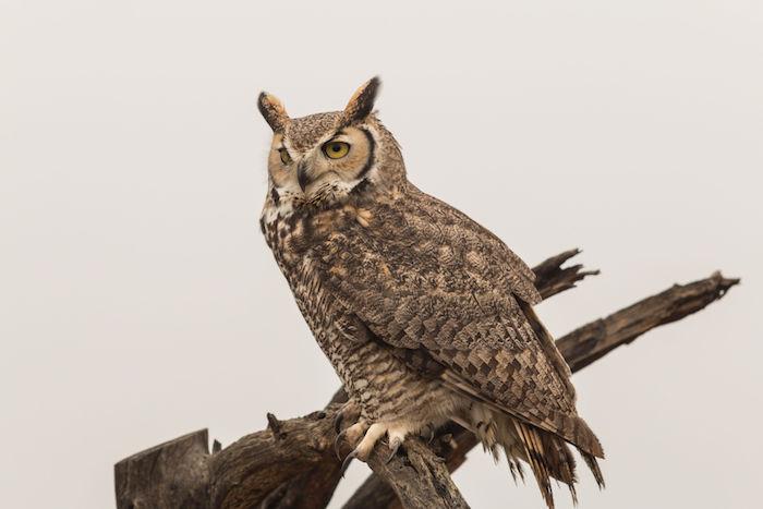 Owl Spirit Animal Owl Totem Meaning