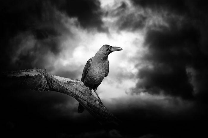Raven Spirit Animal