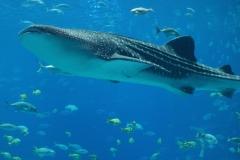 Whale Spirit Animal