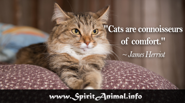 Cat Quotes Best Cat Quotes