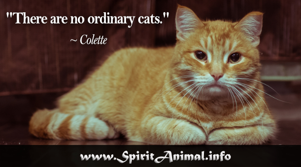 Cat Quotes Adorable Cat Quotes
