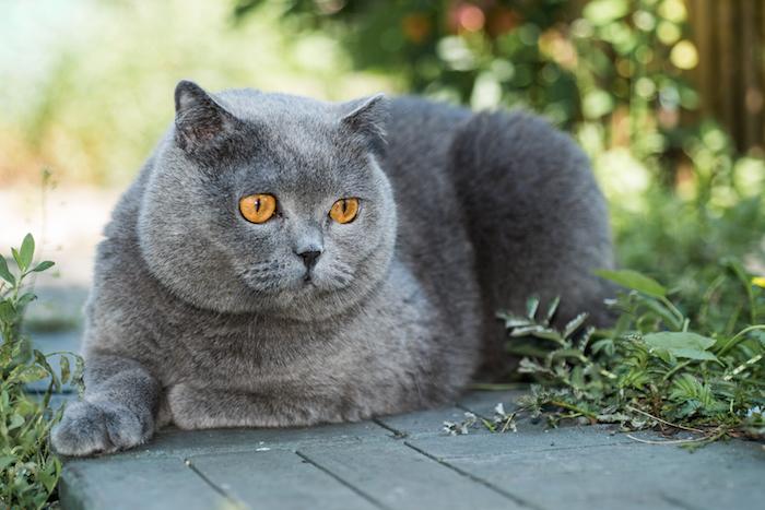 Cat Spirit Animal | Totem