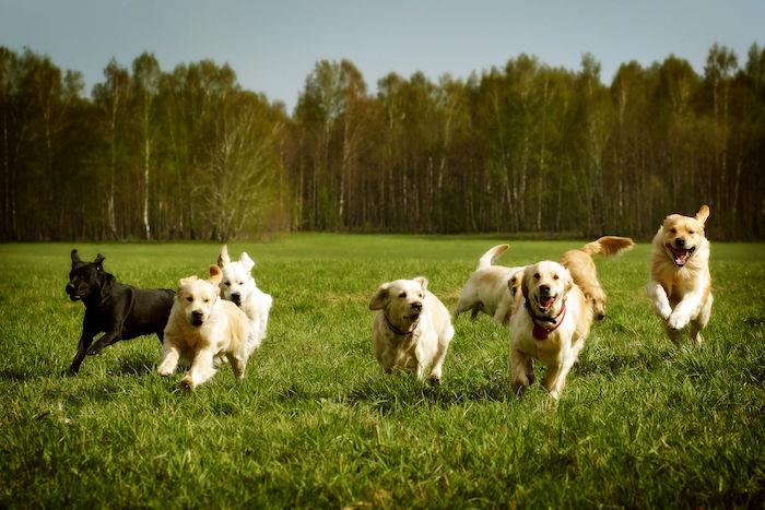 Dog Spirit Animal
