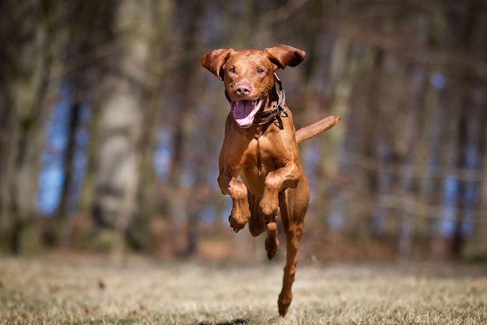Dog Spirit Animal - Spirit Animal Info