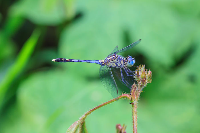 Dragonfly Totem & Spirit Animal | Meaning
