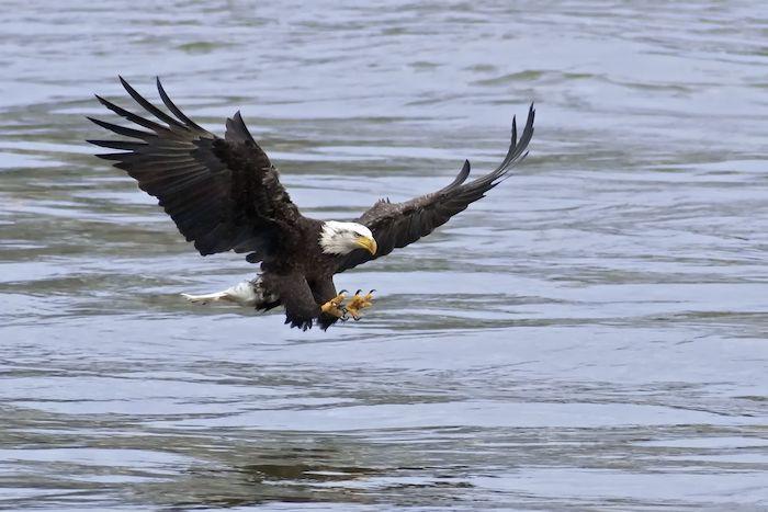 Eagle Spirit Animal - Spirit Animal Info