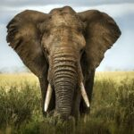 Elephant: 12 Things You Didn't Know About the Elephant   Elephant Symbolism & Spiritual Meaning