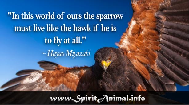 Hawk Quotes