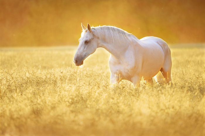 Horse Spirit Animal Meaning