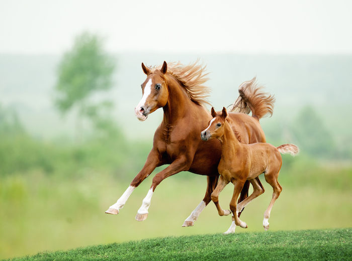Horse Spirit Animal | Meaning