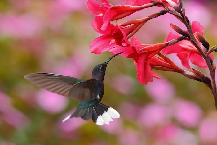 Hummingbird Spirit Animal   Meaning & Symbolism