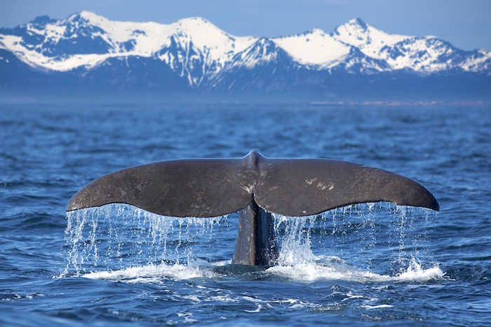 Image result for whale symbolism diving