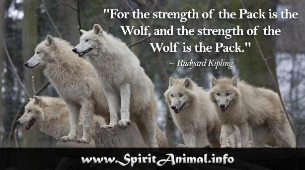 Wolf quotes - Animal pak motivational quotes ...