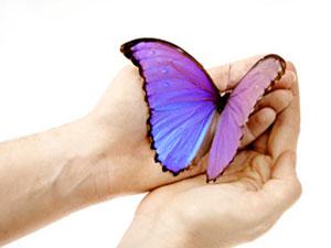 butterfly totem