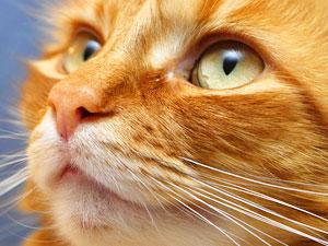 Cat Spirit Animal   Totem
