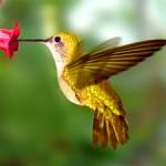 hummingbird totem