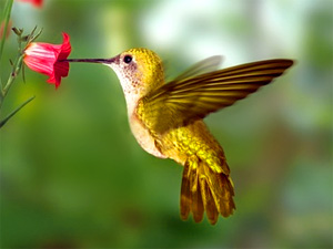 Hummingbird Spirit Animal | Meaning & Symbolism