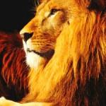Lion Totem Animal