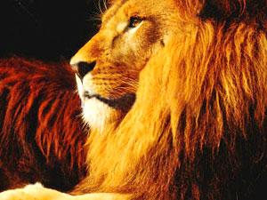 Lion Spirit Animal | Totem Meaning