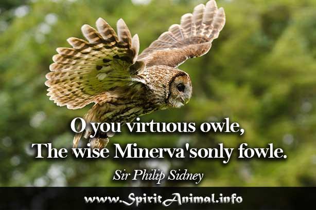 Owl Quotes