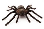 spider spirit animal & totem meaning