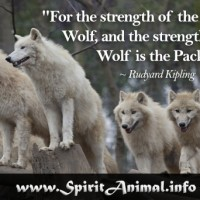 Wolf Quote 5
